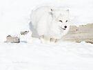 Running Arctic Fox by Yannik Hay