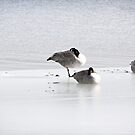 Canada Geese on Ice by Yannik Hay
