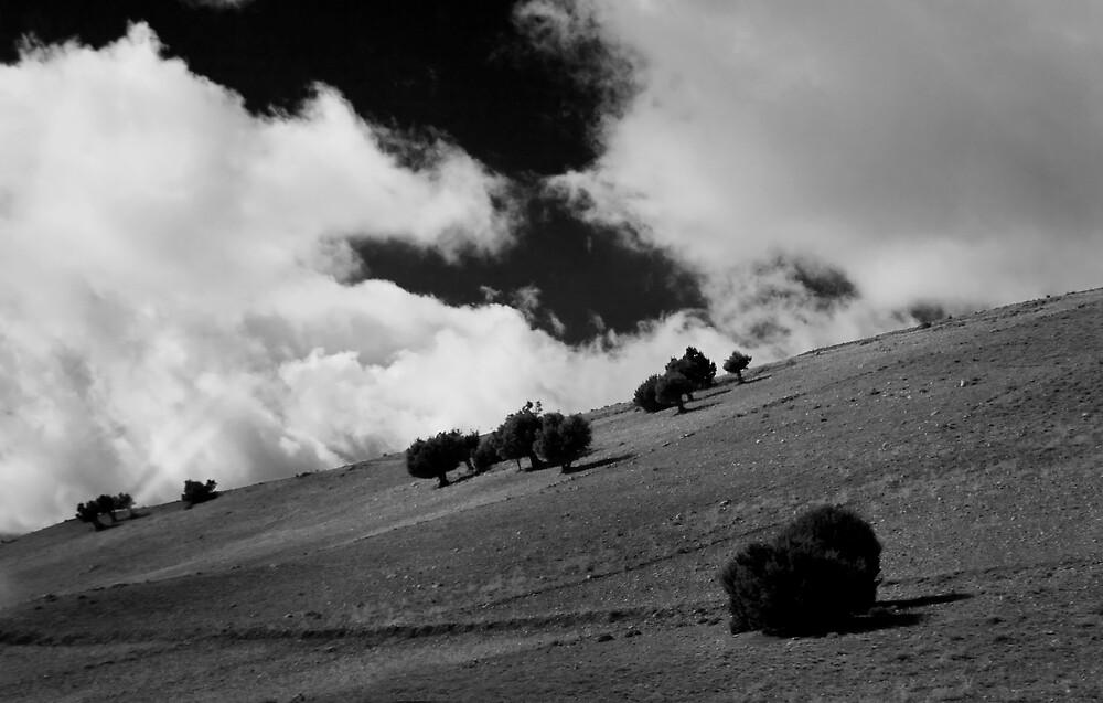 Hillside by Alec Good