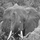 Fun Elephant by skaranec1981