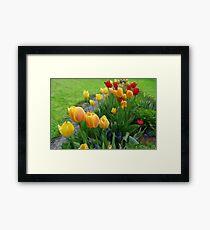 Tulipops Lollipops Framed Print