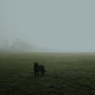 Spooky Fog by Vicki Spindler (VHS Photography)