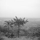 Acacia Africa by skaranec1981