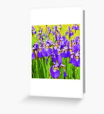 Field of Purple Iris Blooms Greeting Card