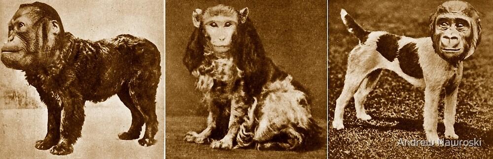 Monkey Business 2. by Andrew Nawroski