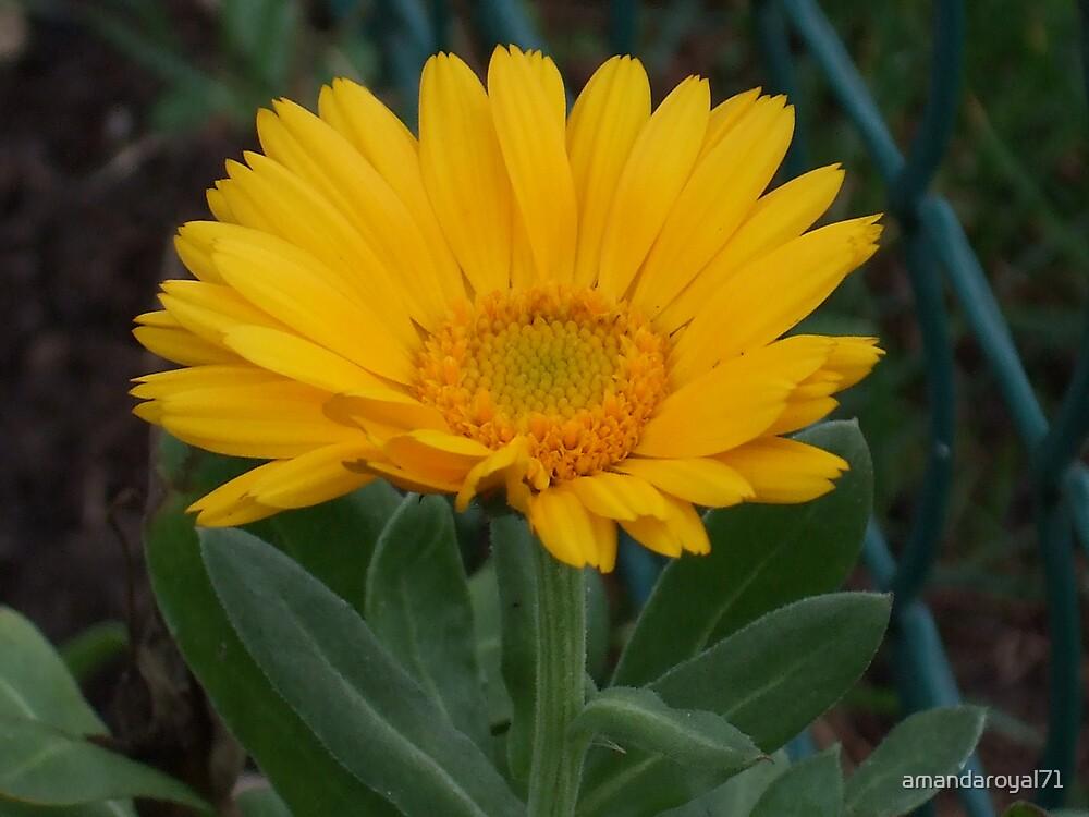 pretty flower by amandaroyal71