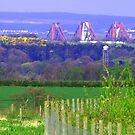 Bridge tops by Tom Gomez