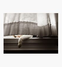 Cat Napping On A Window Sill Photographic Print