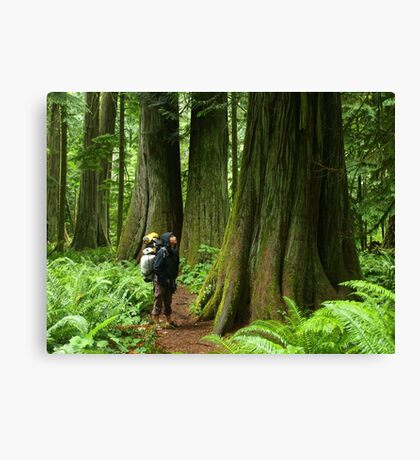 Meeting with a forest giant Canvas Print