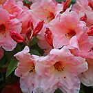 Awesome Azalea by RedHillDigital