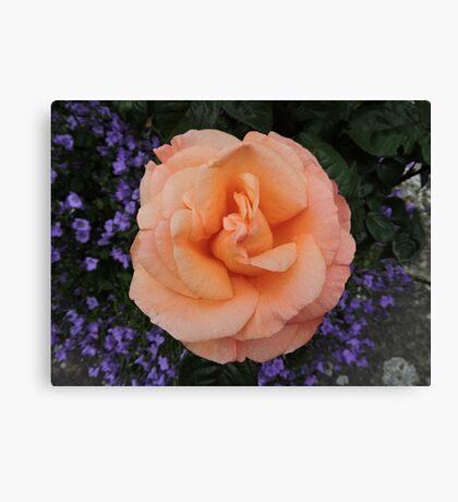 Peach & Lilac Canvas Print