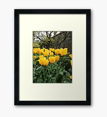 Happiness Is Yellow Tulips Framed Print