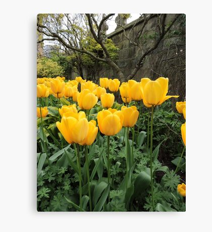 Happiness Is Yellow Tulips Canvas Print