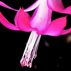 Cactus flower in the Night by AngieDavies