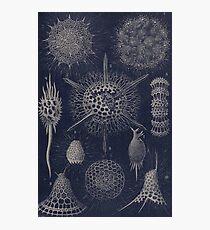 Vintage Radiolaria Fossils Photographic Print