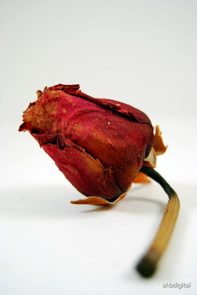 A Wedding's Rose by ahbdigital