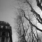 Rome Trees - b&w by Bello Designs