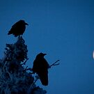 Raven Moon by Marty Samis