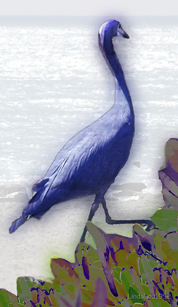 Small Blue Heron by LindaLou1952