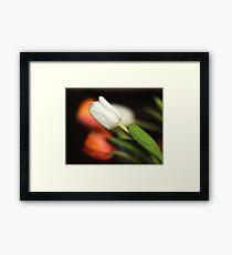 Orange and white tulips Framed Print