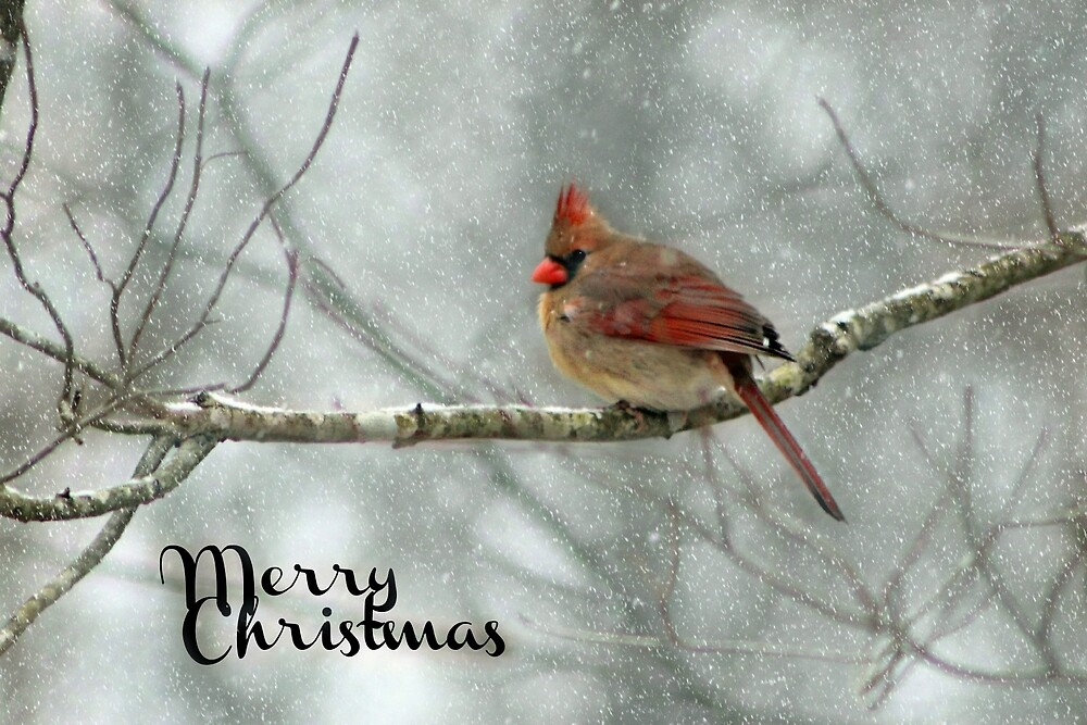 Merry Christmas  - Winter Cardinal by William Tanneberger