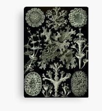 Natural History Lichen Canvas Print