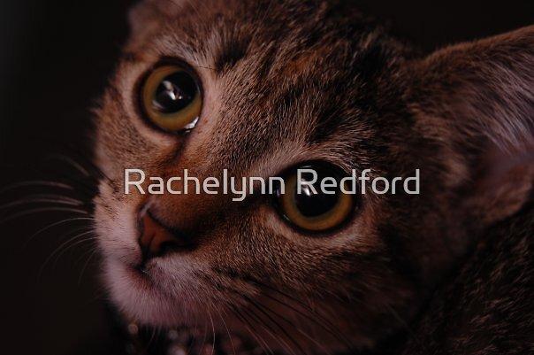 Innocence by Rachelynn Redford
