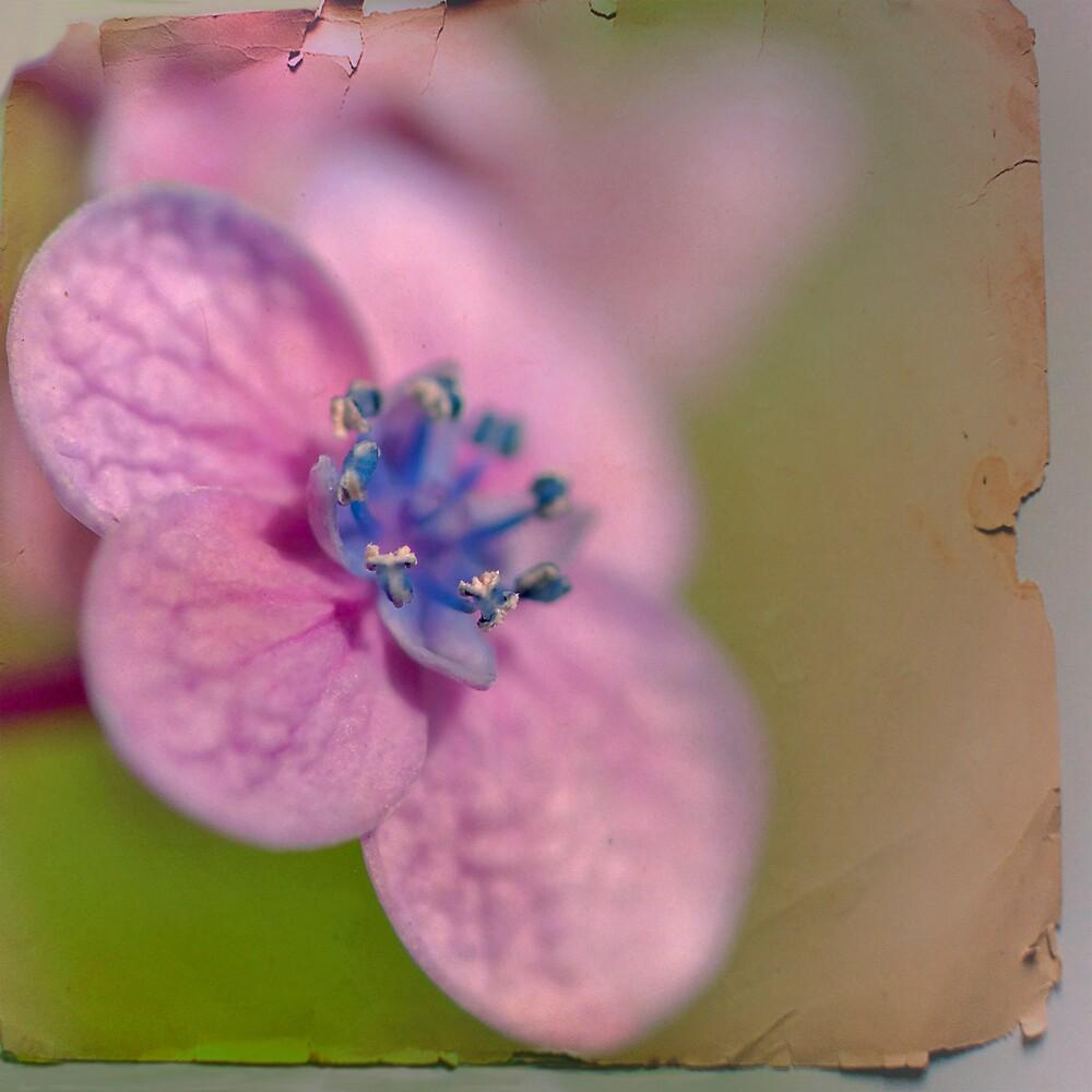 flower-pressing by SharonLea