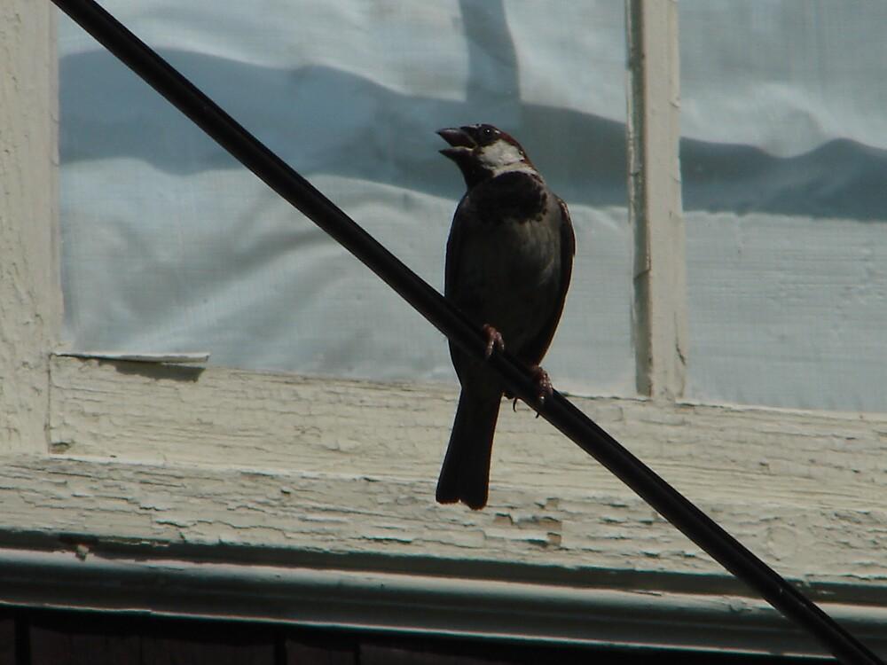 little bird by rebeccag123