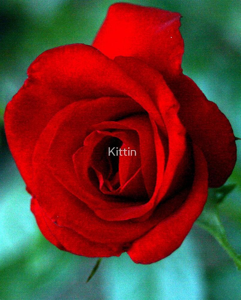 rose 09 by Kittin
