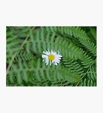 Flower Among the Ferns Photographic Print