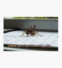 Thank You For The Lovely Card - Weta - NZ Photographic Print