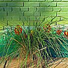 Wall Tulips  by Ethna Gillespie