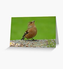 Hey, There Is Plenty Down Here! - Chaffinch - NZ Greeting Card