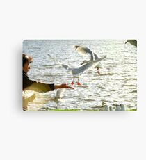 In Tune And In Touch With Nature - Seagulls - NZ Canvas Print