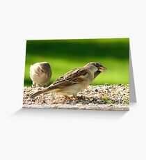 Always Be Alert! - House Sparrows - NZ Greeting Card