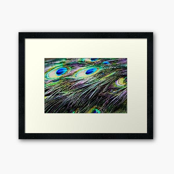 Peacock Pattern Framed Art Print