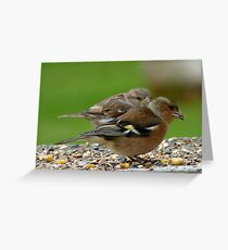 You Make It Look So Easy! - Chaffinch & Sparrow - NZ Greeting Card