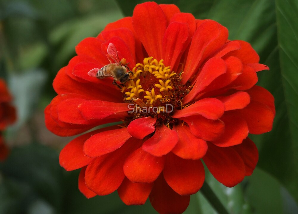 Collecting Pollen by SharonD