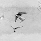 Tree Swallows by CarolM