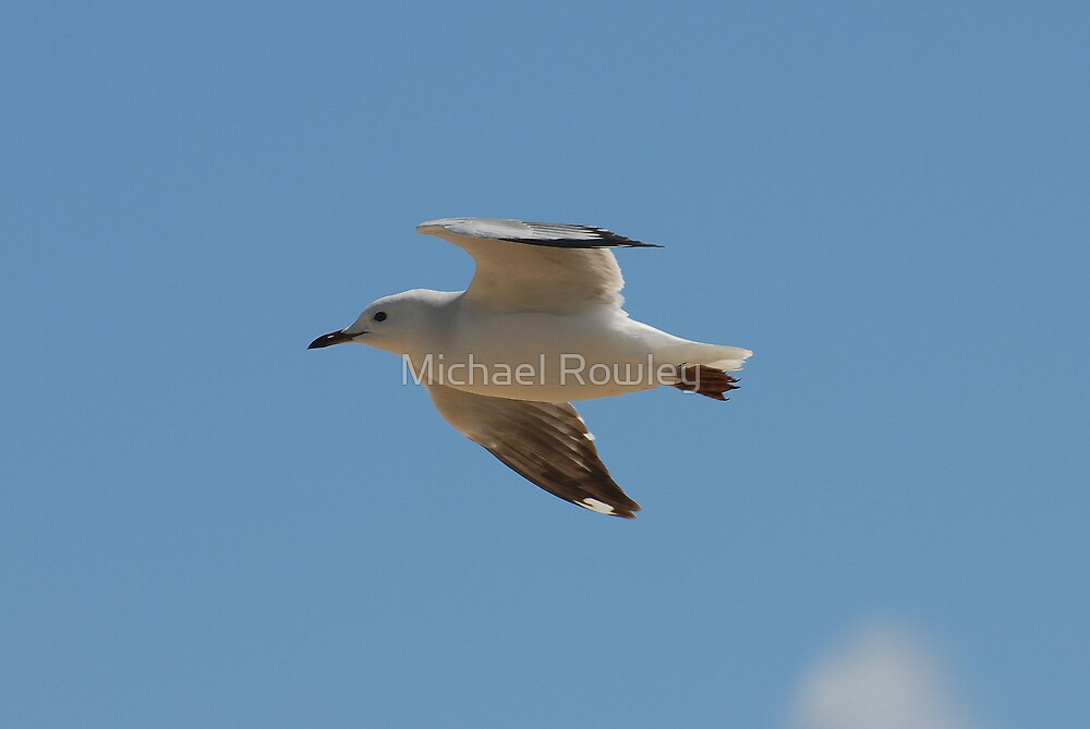 IN FLIGHT by Michael Rowley