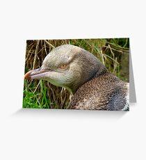 Do I Look Grumpy? - Rare Yellow Eyed Penguin - NZ Greeting Card