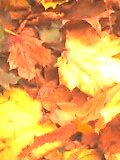 Leaves extreme close up by James  Dedman