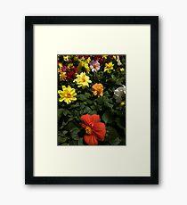 Mystery flower 7 Framed Print