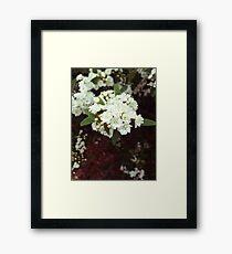 Small White Flowers Framed Print