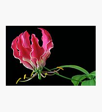 Flame Lilly Photographic Print