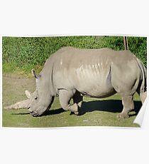 I'm A Big, Big, Beast! - Rhinoceros - Orana Wildlife Park CHC NZ Poster