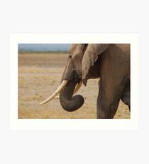 Elephant, Amboseli Art Print