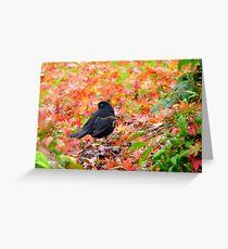 Autumn Rush! - Blackbird - Southland NZ Greeting Card
