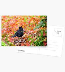 Autumn Rush! - Blackbird - Southland NZ Postcards